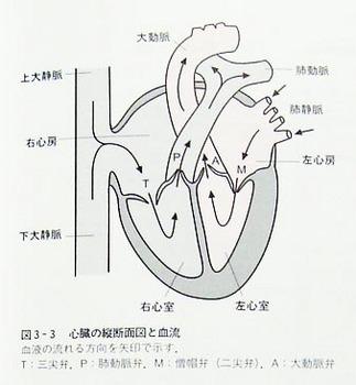 shinzou1_DSC00024.jpg